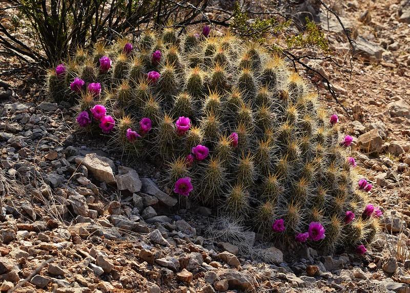 NEA_1048-7x5-Cactus Flowers.jpg