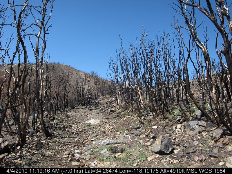 20100404059-Angeles National Forest, Strawberry Peak trail.JPG