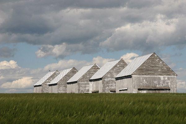 alberta farmland.jpg
