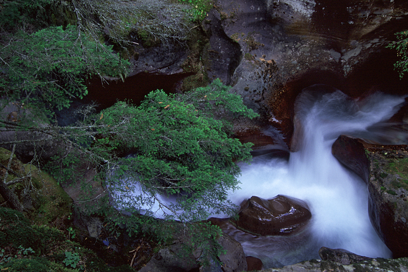 Avalanche Creek, Glacier National Park, MT