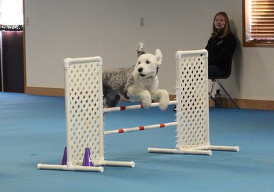 SDTC Agility Trial - Saturday, Nov. 14, 2015