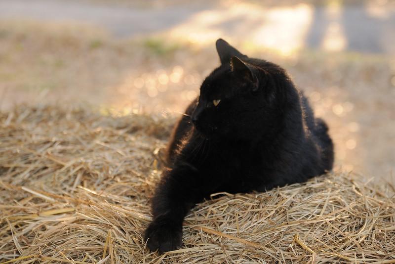 Bobb, enjoying a pretty day.
