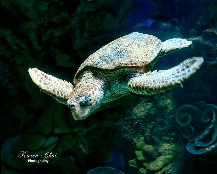 Sea Turtle sm.jpg