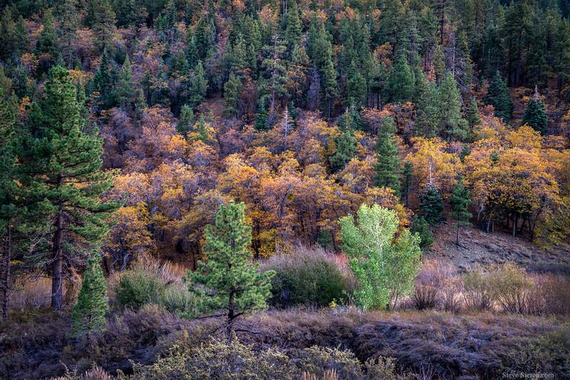 San_Gabriel_Mountains_Fall_Color_Southern_California_DSC3247.jpg