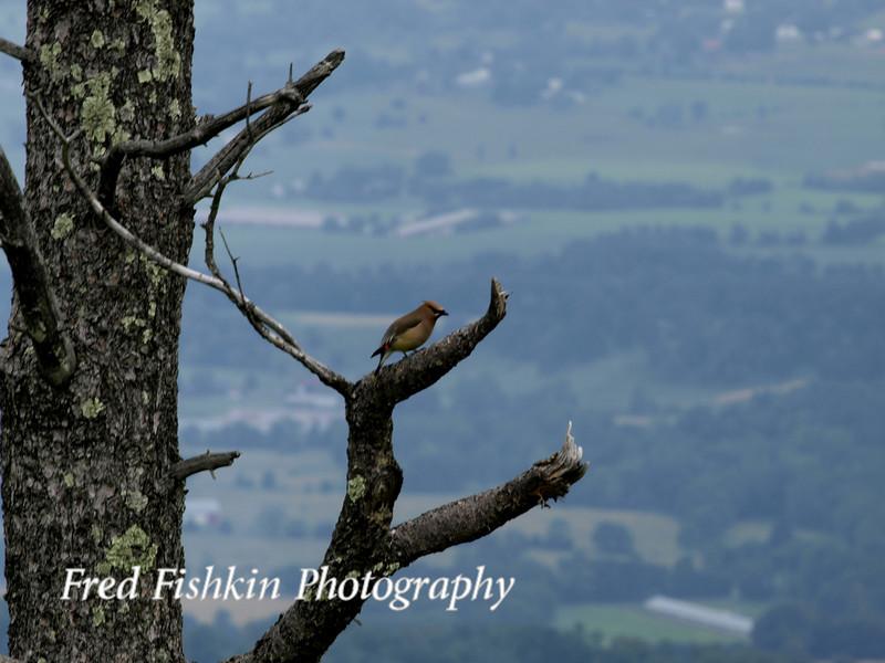 skyline bird.jpg