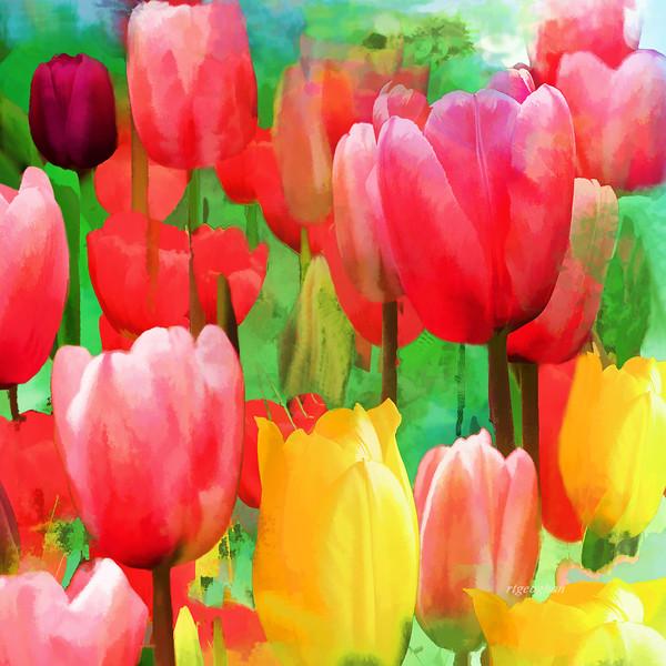 Tulip Garden Fantasy Squared 1