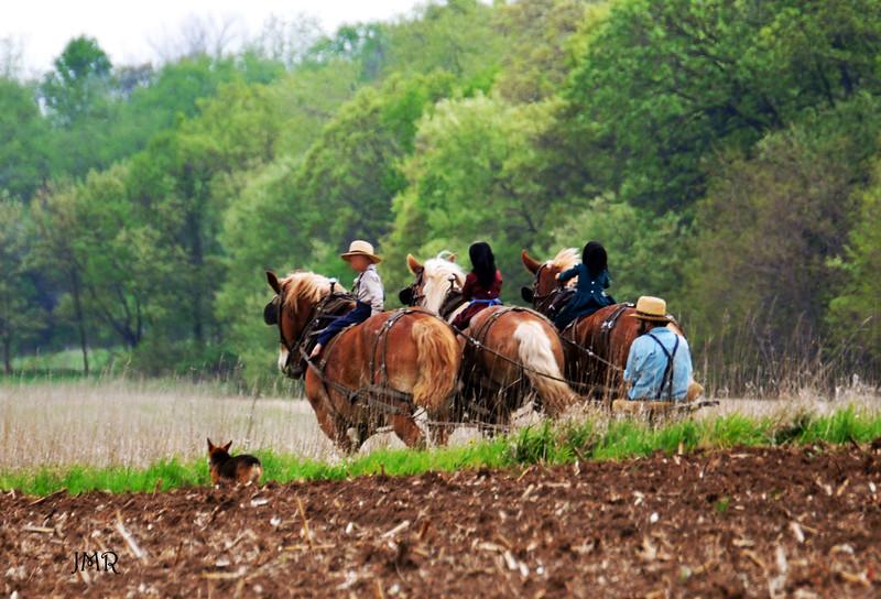 012- Amish 3 horses riders .jpg