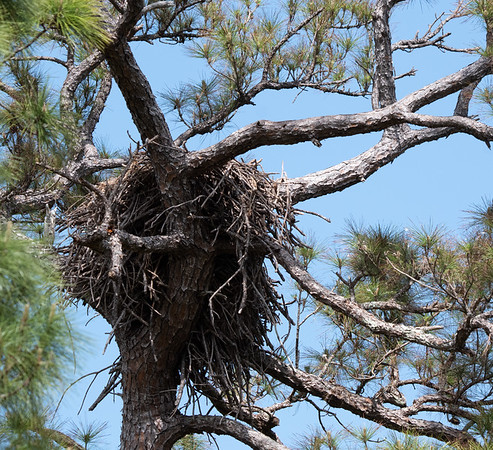 Bald Eagle Nest Be-27 March 21, 2020
