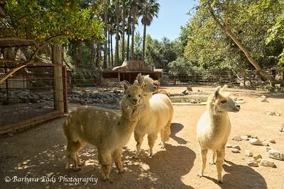 Rancho Las Lomas Outing - May 29, 2013