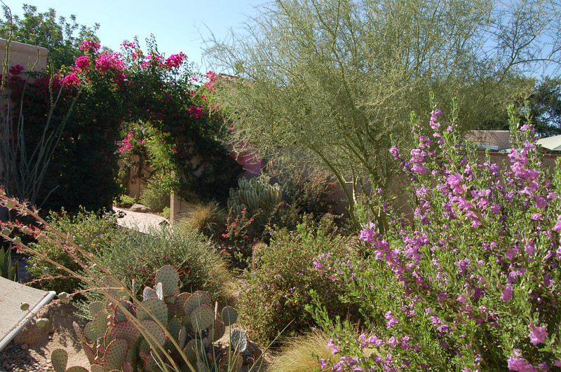 20120607_Scottsdale Back Yard_010.JPG