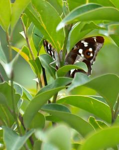 Pyrenees Butterflies
