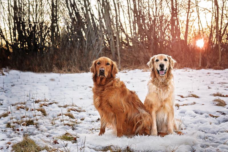 Ellie and Sawyer1 Digital.jpg