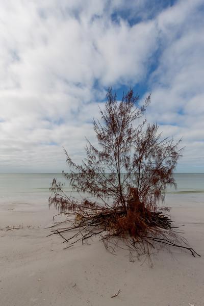 Florida Gulf Views