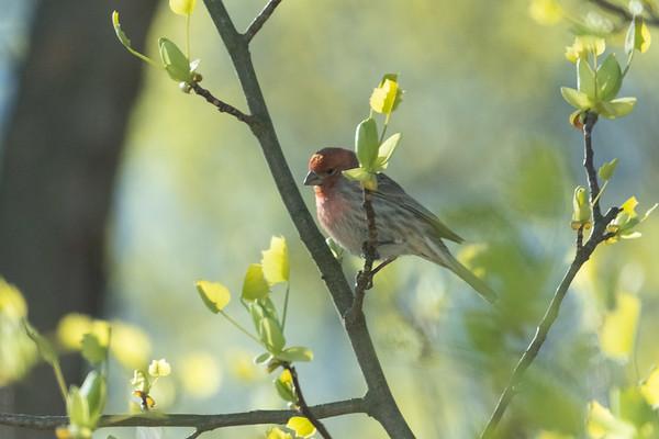 Birdfeeder Shots