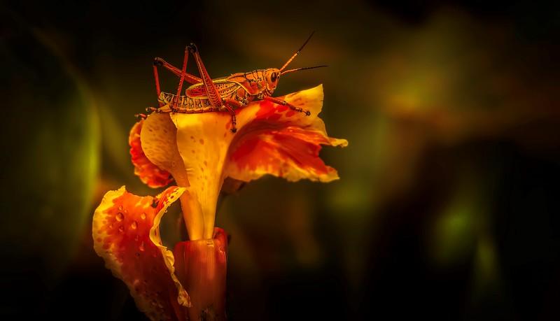 Ugly Bugs&Beautiful Beetles-199.jpg