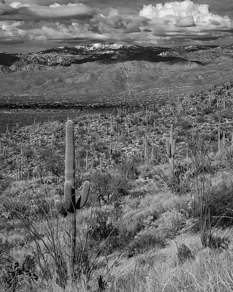 B+W Day at Saguaro East