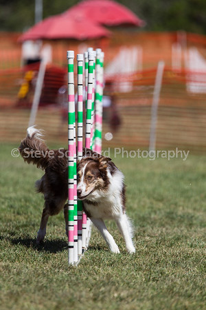 Del Monte KC Agility - June 2nd, 2013