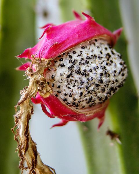 Oozy Magenta Flower.jpg