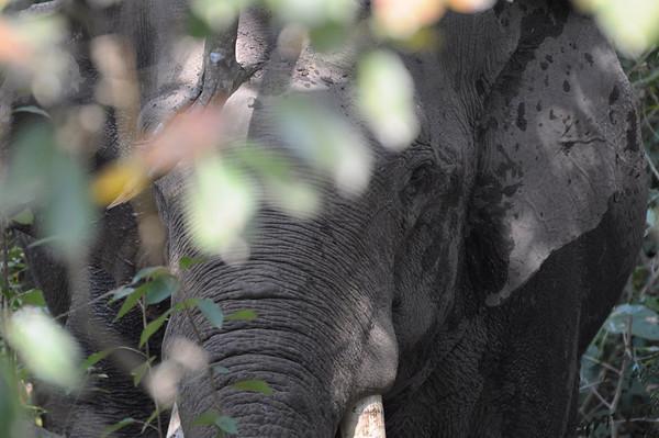 Best Of India Wildlife 2011