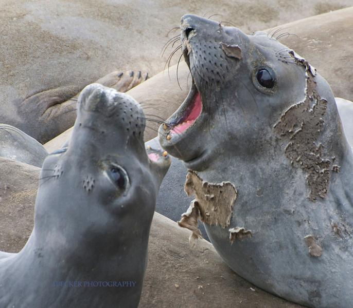 Seal talk.jpg