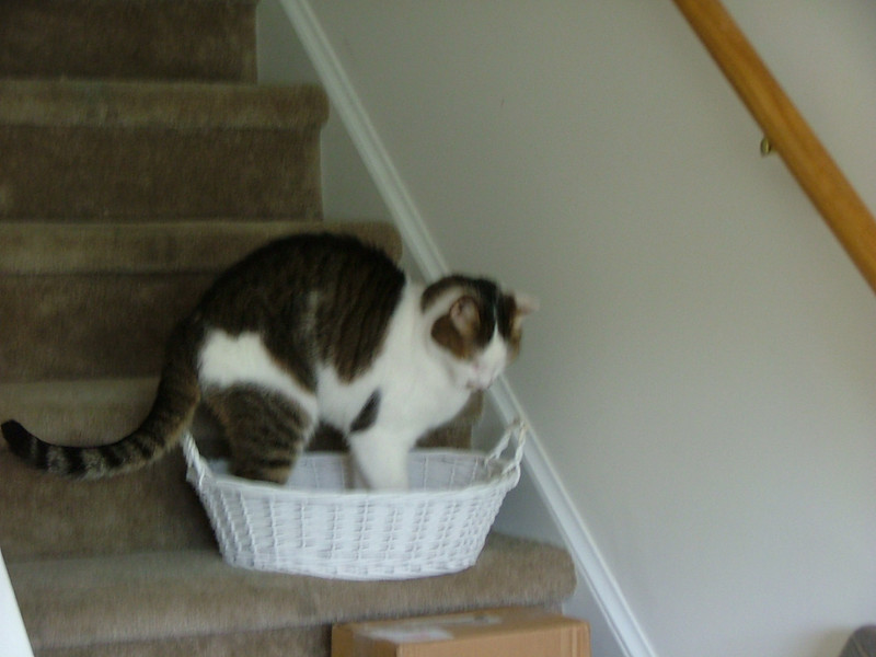 Stretching in the basket after the move
