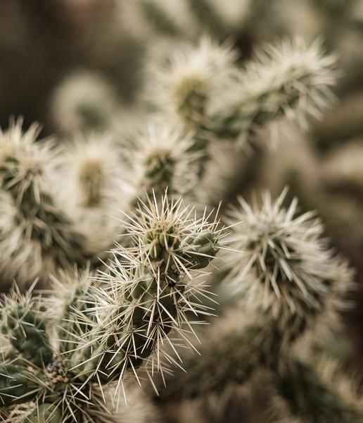 Tucson_17-653.jpg