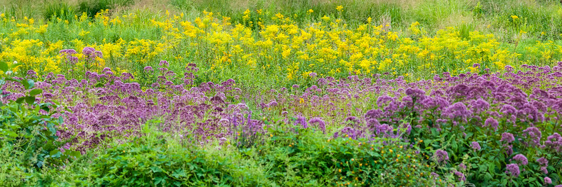 EyeCatcher_Flowers_in_the_Field_081812_0121