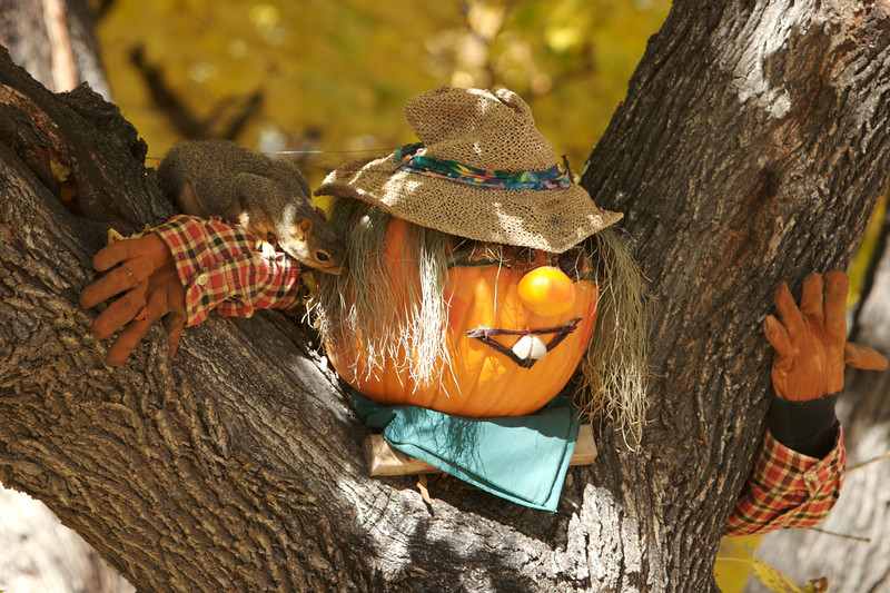 Halloween  3222.jpg