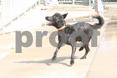 Dog Paddle IC 090507