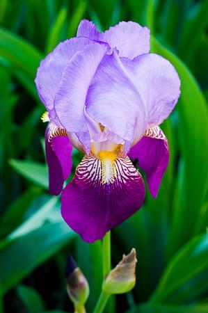 Backyard Flower - May_24_2014