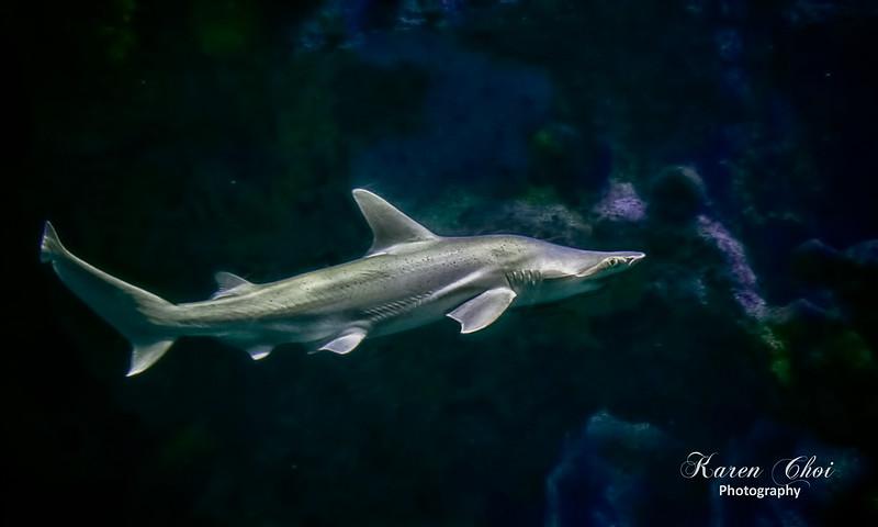 Sinister Shark sm.jpg