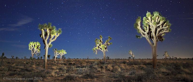 Joshua trees light painted panoramic