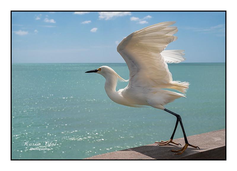 Egret at Venice Beach sm.jpg
