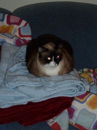 cats-201203