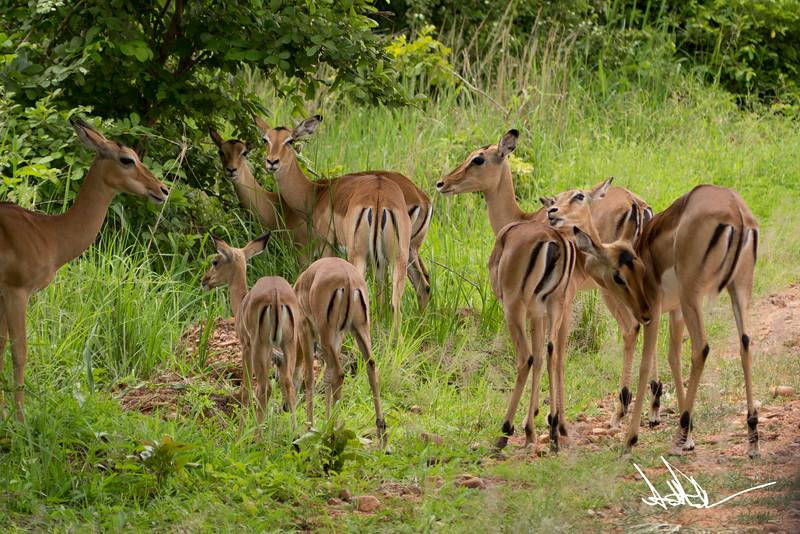 AntelopeS-5.jpg