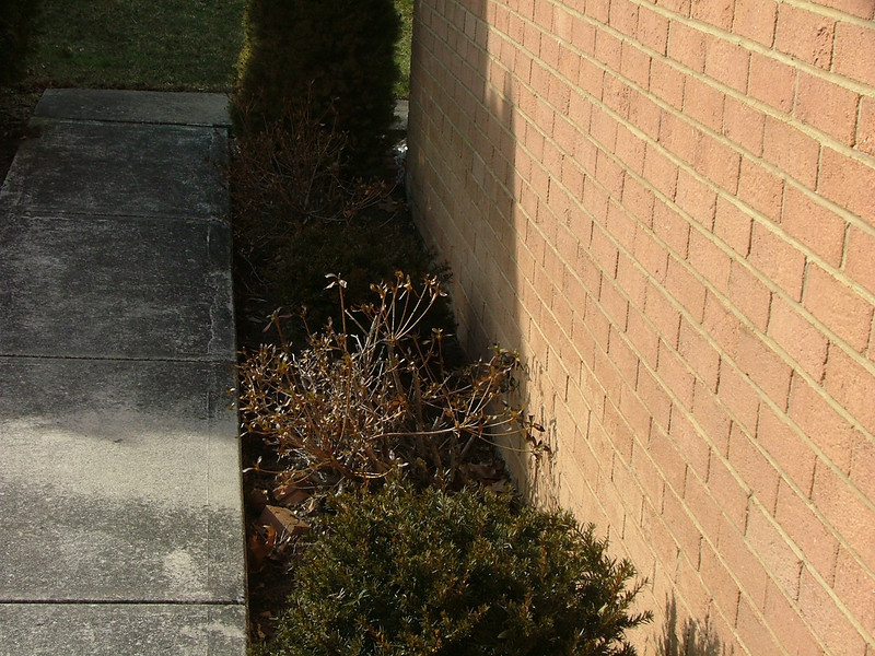 need to keep shrubs clear of house
