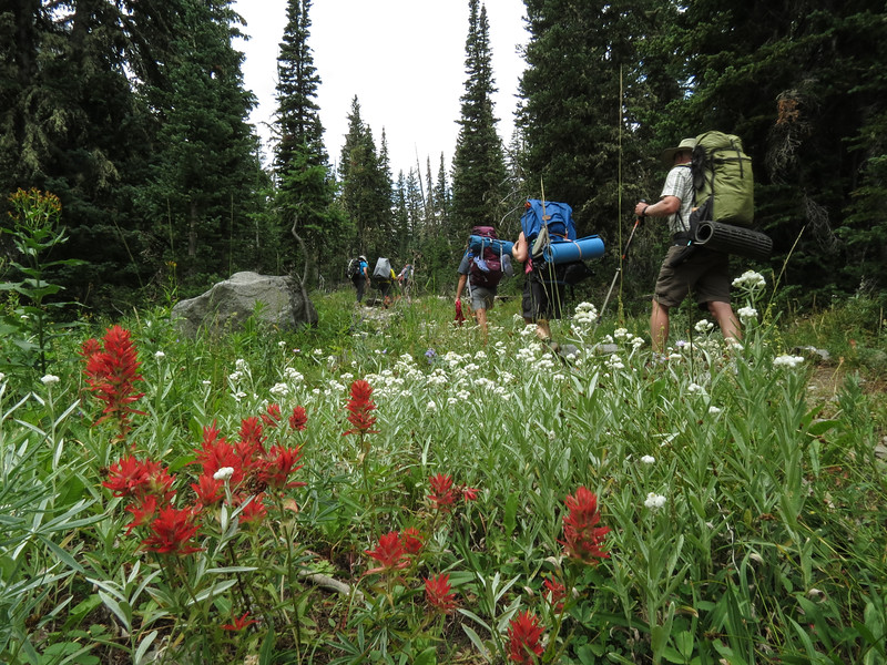 Much of the hike is in open woods, but even though this was August, we still saw several types of wildflowers.
