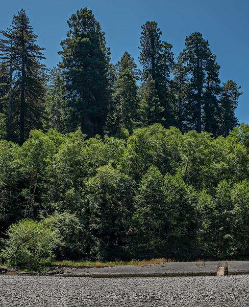 Tall Trees Trail & Grove