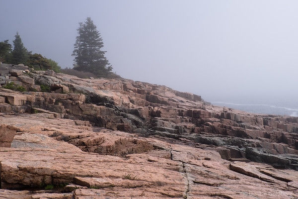 along Ocean Path, Acadia National Park