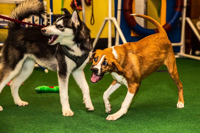 on Command dog Training June 2019-.jpg