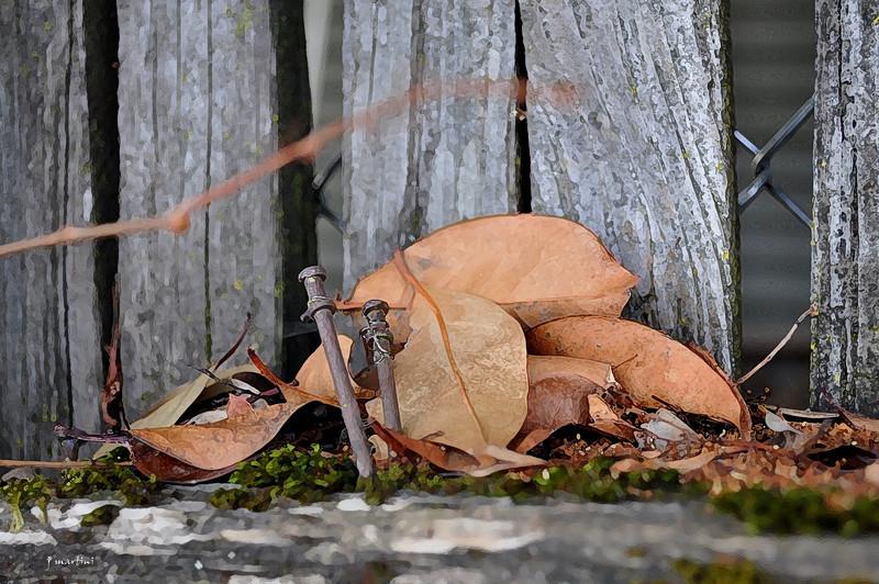 nailed 10-29-2010.jpg