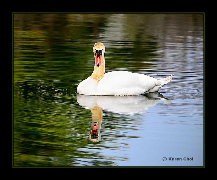 swan 6 sm.jpg