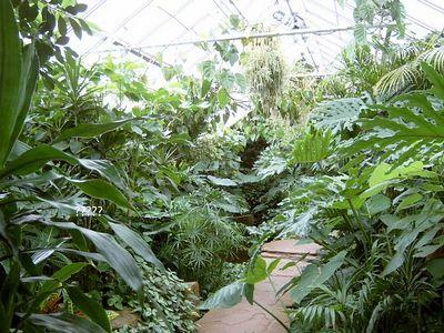 Duke Tropical Garden