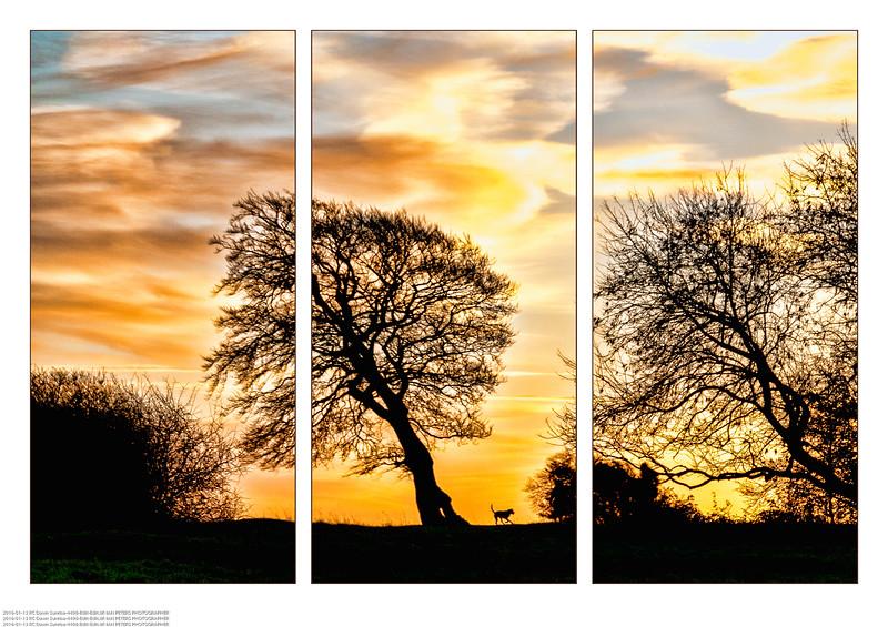 Lone Tree Triptych.jpg