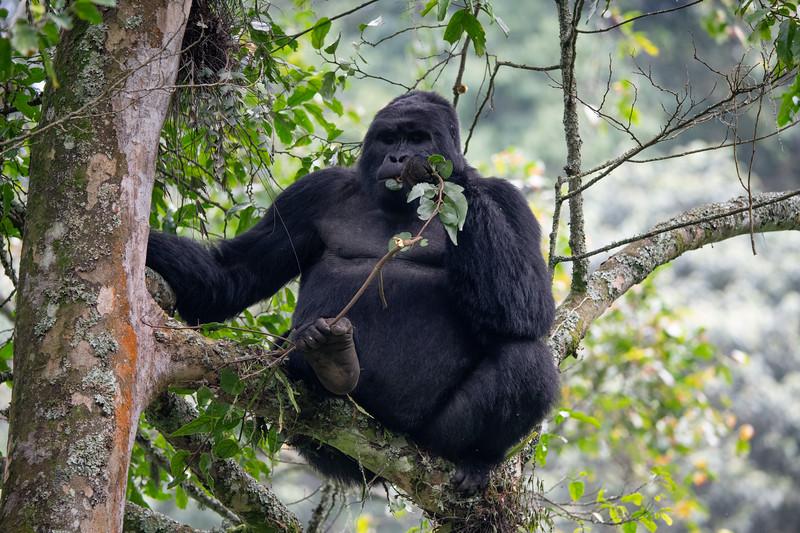 Uganda_T_Gor-2647.jpg