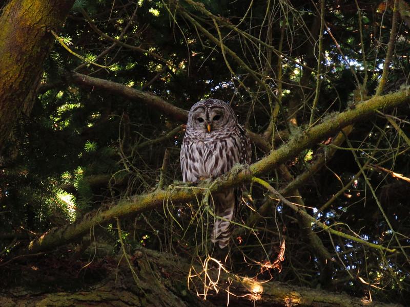 Owl by Alice.jpg
