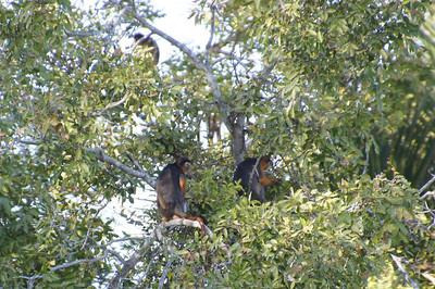 Gambia animals, Jan 2013
