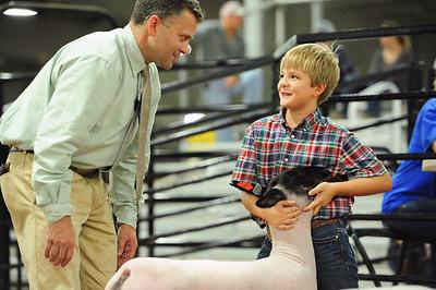 Market Lamb Ringshots - Showmanship