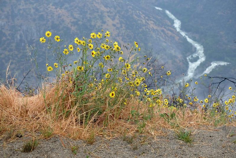 California Day 6 Kings Canyon 05-30-2017 123.JPG
