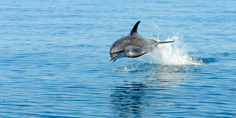 Offshore Dolphins July 2014 MMGINC_2.jpg